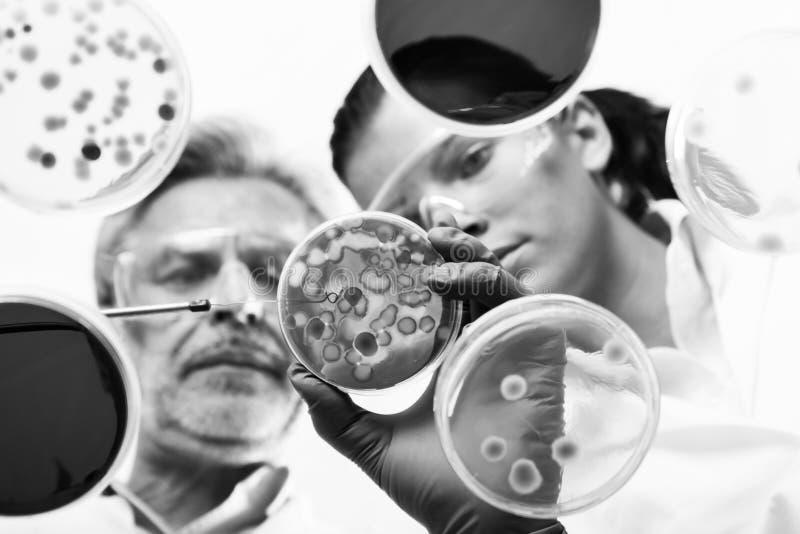 Cient?ficos de vida que investigan en el laboratorio de la atenci?n sanitaria fotografía de archivo libre de regalías