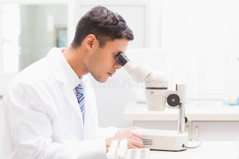 Cientista concentrado observando o prato de petri com microscópio imagens de stock