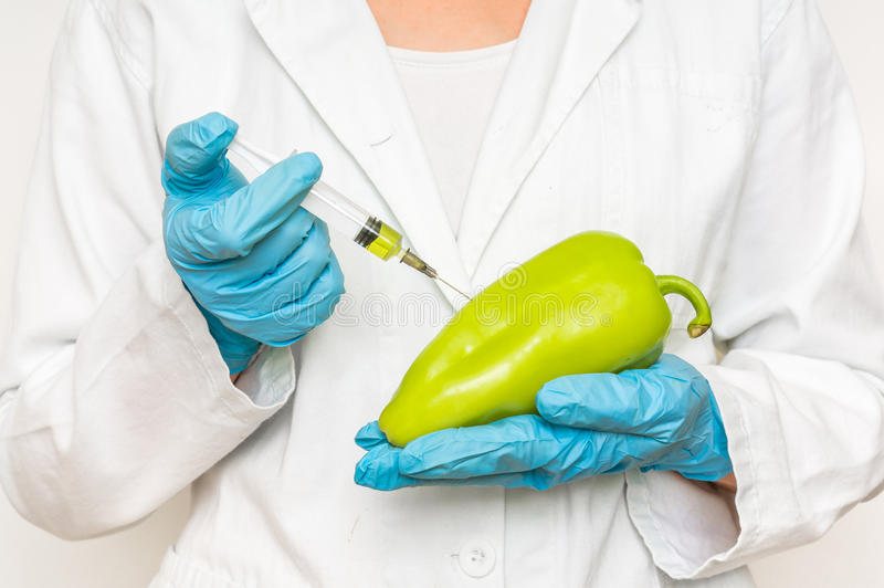 Cientista de GMO que injeta o líquido da seringa na pimenta imagem de stock royalty free
