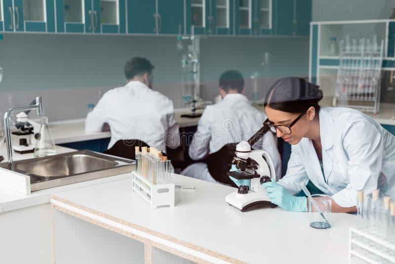 Cientista fêmea nos monóculos que trabalham com microscópio quando colegas que sentam-se atrás no laboratório imagens de stock