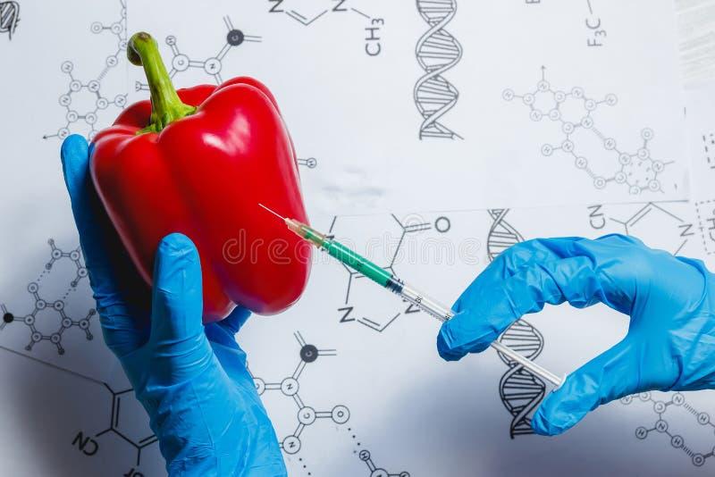 Cientista Injecting Green Liquid de GMO da seringa na pimenta vermelha - conceito Genetically alterado do alimento imagens de stock royalty free