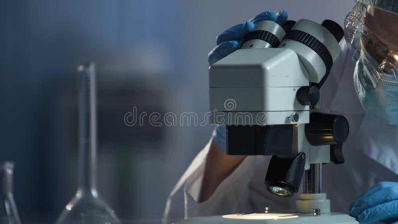 Cientista médico que prepara a superfície do microscópio para o processo de pesquisa macro fotos de stock royalty free