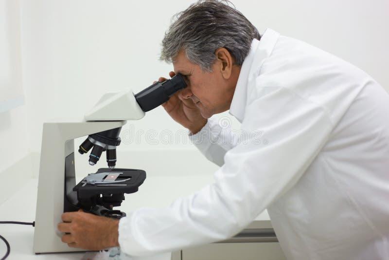 Cientista que faz a análise técnica e química do milho e do soyb fotos de stock royalty free