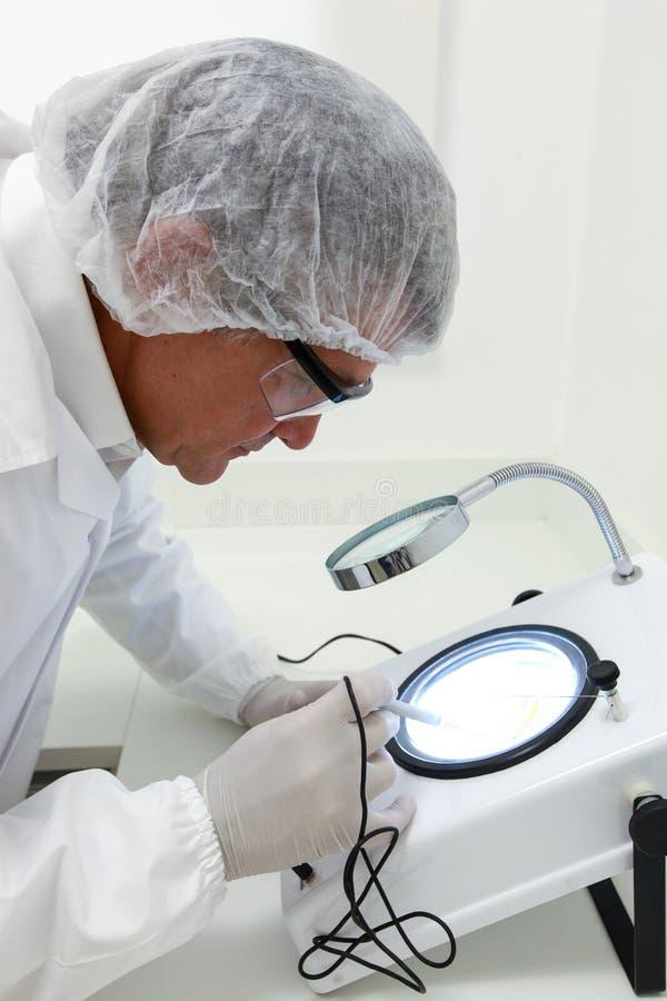 Cientista que faz a análise técnica e química do milho e do soyb imagens de stock royalty free