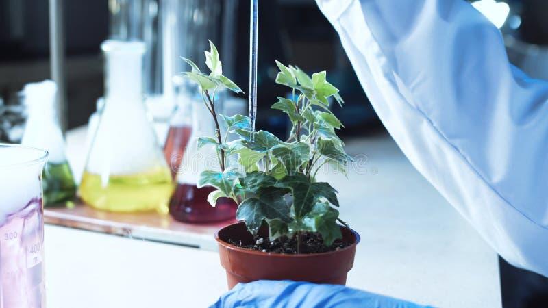 Cientista que faz experiências em uma planta fotografia de stock