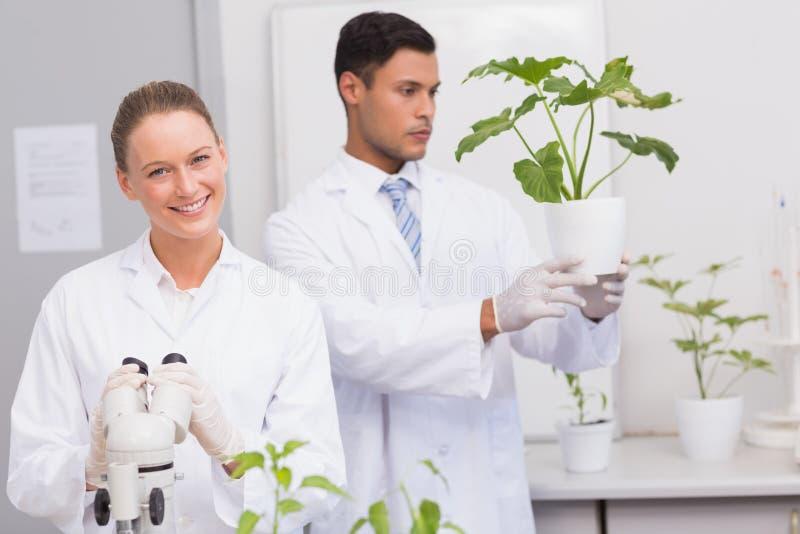 Cientista que sorri na câmera quando colega que olha a planta foto de stock