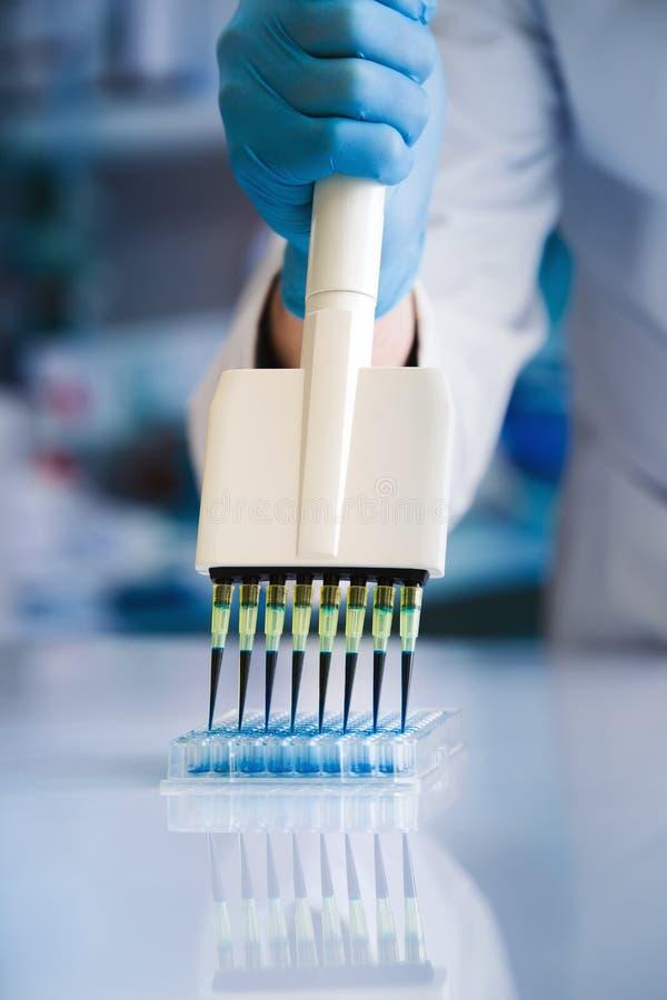 Cientista que trabalha com microplate no laboratório imagens de stock royalty free