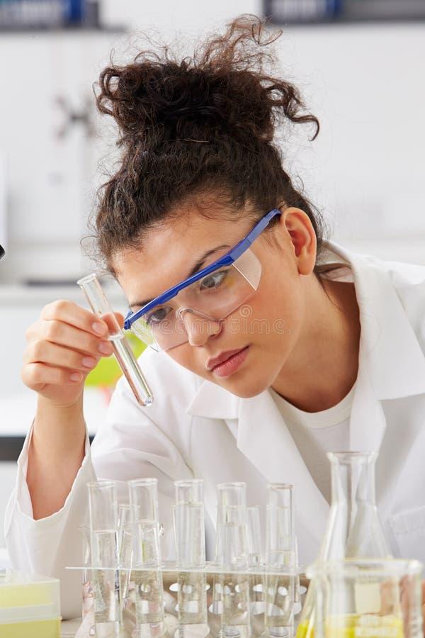Cientista Studying Test Tubes na cremalheira fotografia de stock royalty free
