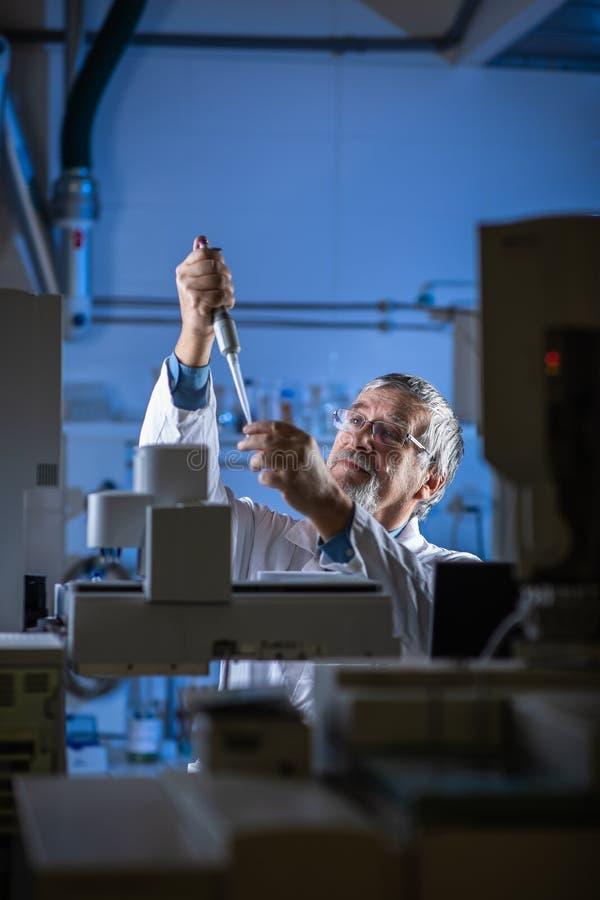 Cientista superior em uma pesquisa de execu??o do laborat?rio de qu?mica - olhando amostras da cromatografia de g?s imagem de stock royalty free