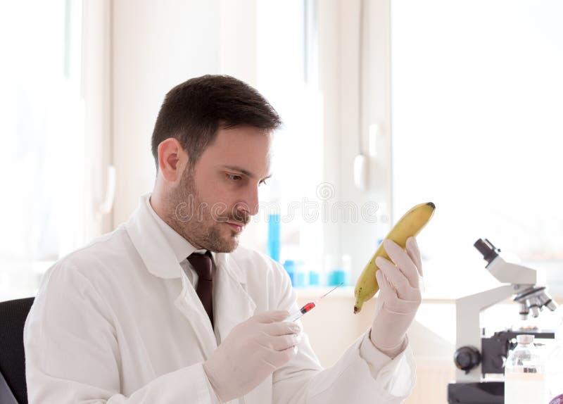 Cientista testando banana no laboratório fotografia de stock royalty free