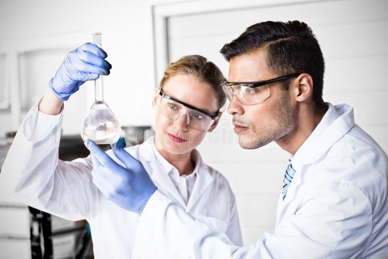Cientistas concentrados que olham a taça fotografia de stock
