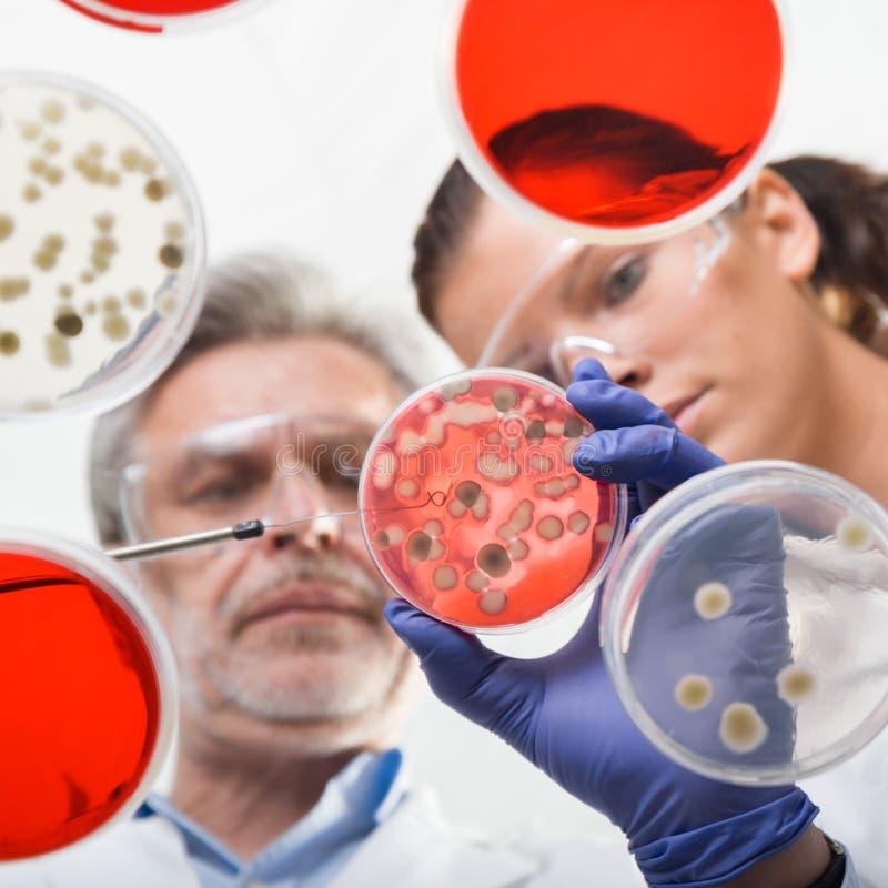 Cientistas de vida que pesquisam no laboratório dos cuidados médicos fotos de stock royalty free