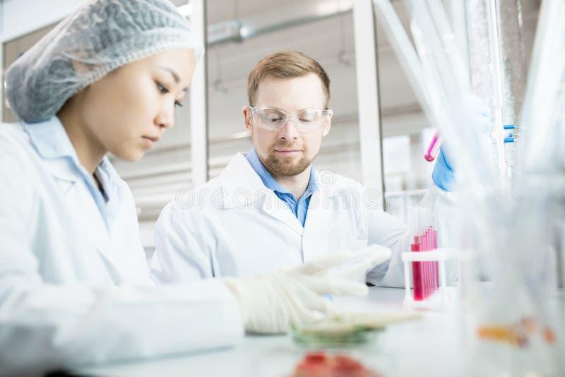 Cientistas no laboratório imagens de stock royalty free