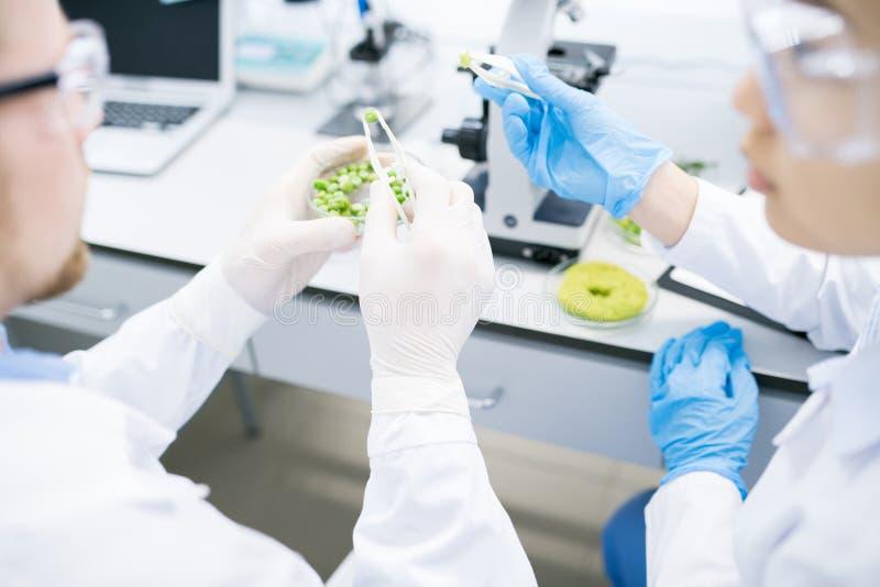 Cientistas que fazem a pesquisa no laboratório imagens de stock