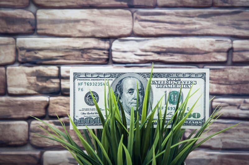 Cientos billetes de dólar en hierba en un fondo de la pared de ladrillo El concepto de protección del medio ambiente imágenes de archivo libres de regalías