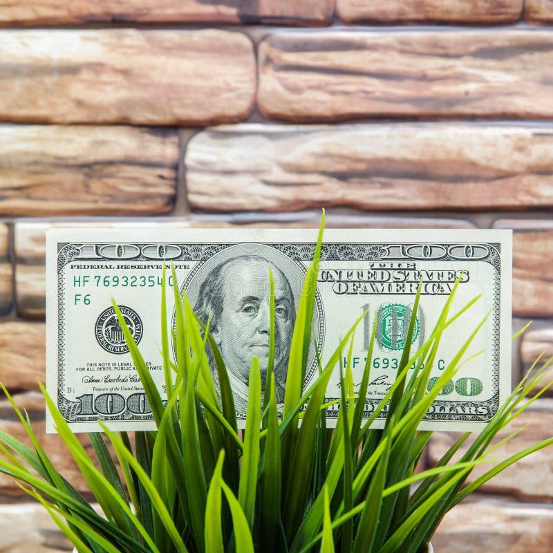 Cientos billetes de dólar en hierba en un fondo de la pared de ladrillo El concepto de protección del medio ambiente fotos de archivo