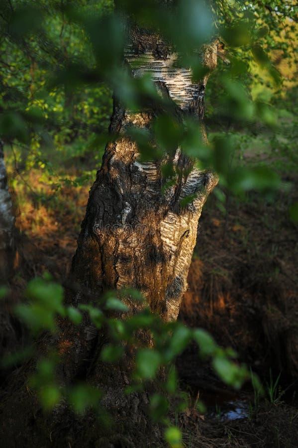 Ciepły światło słoneczne na drzewach zdjęcia royalty free
