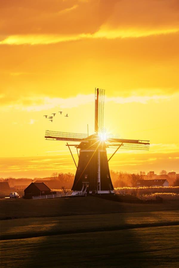 Ciepły i wibrujący wschód słońca gradient zdjęcie royalty free