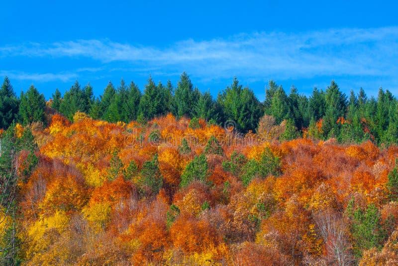 Ciepły las fotografia stock