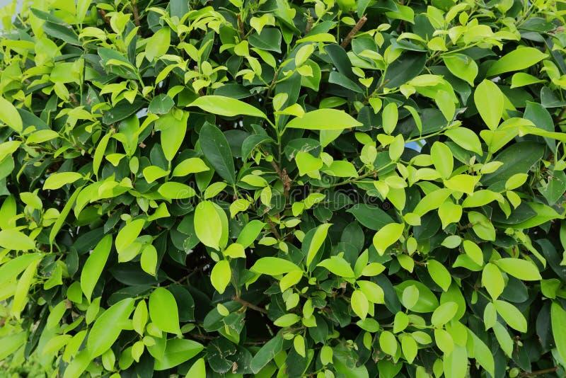 Cierre agradable encima de la vista de pequeñas hojas de la planta verde Fondo verde hermoso fotos de archivo