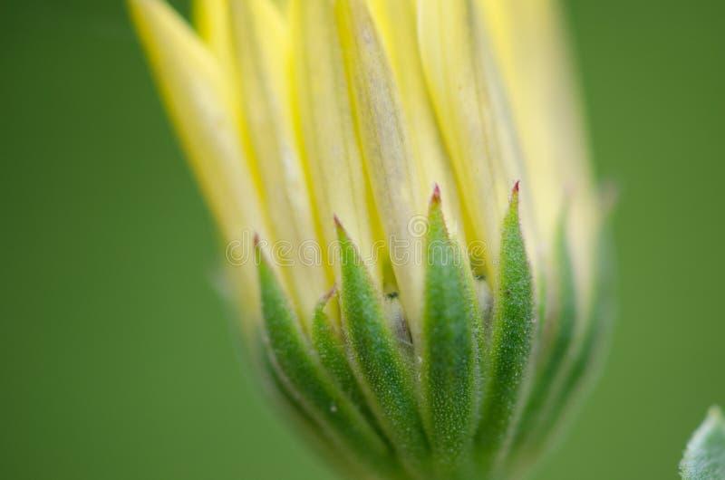 Cierre amarillo de la flor para arriba imagen de archivo libre de regalías