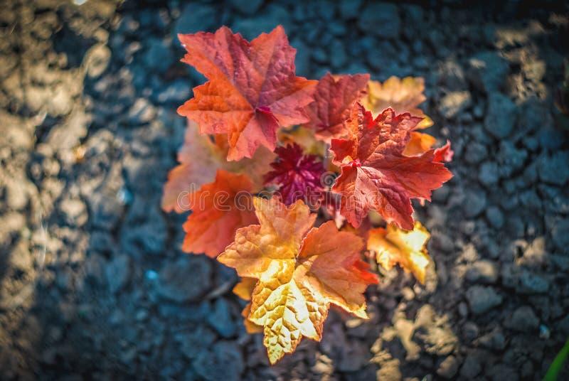 Cierre brillante hermoso y pacífico encima de la foto de plantas y de flores con cuidadosamente ajardinar foto de archivo libre de regalías