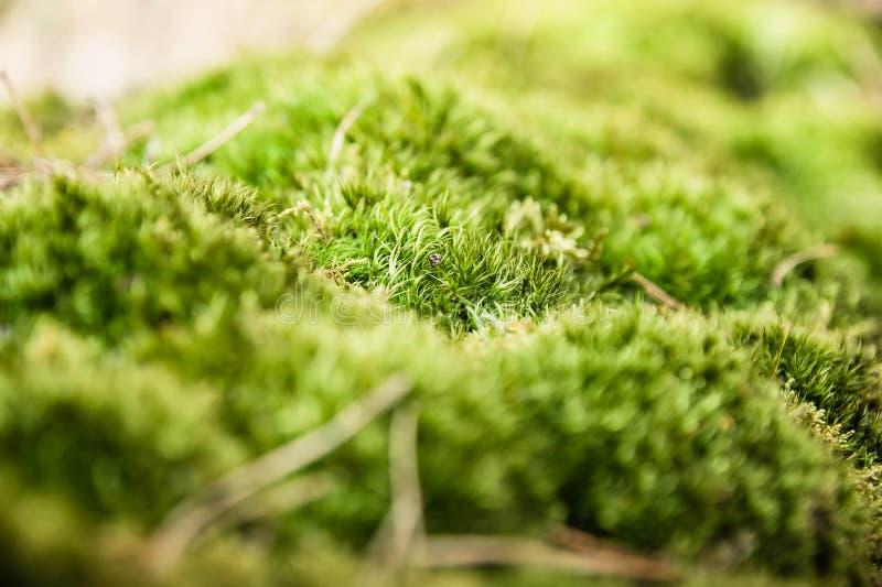 Cierre brillante verde del musgo para arriba fotografía de archivo libre de regalías