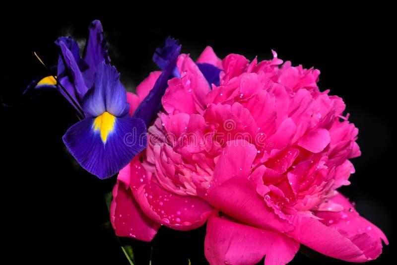Cierre colorido hermoso de la peonía y del iris para arriba en la sol foto de archivo
