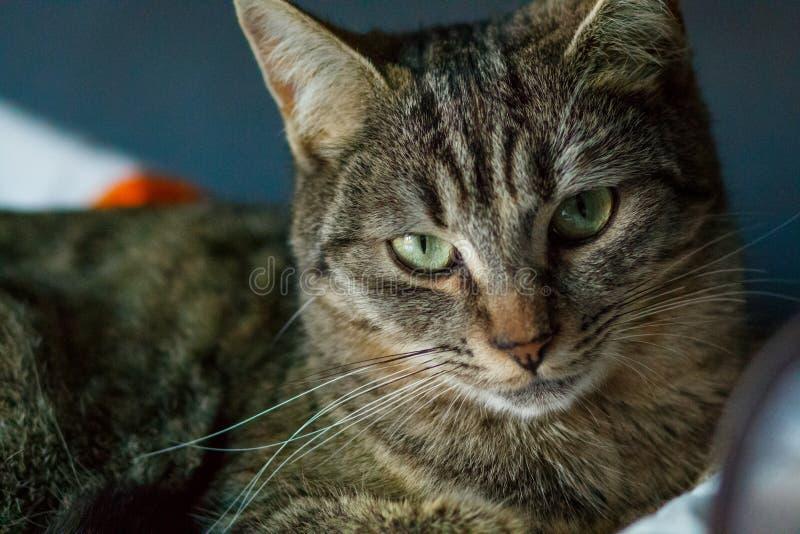 Cierre constante de la expresión del gato para arriba foto de archivo