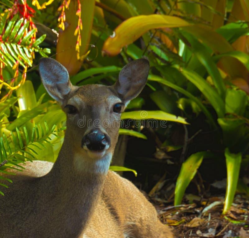 Cierre de HDR encima del lecho de los ciervos foto de archivo libre de regalías