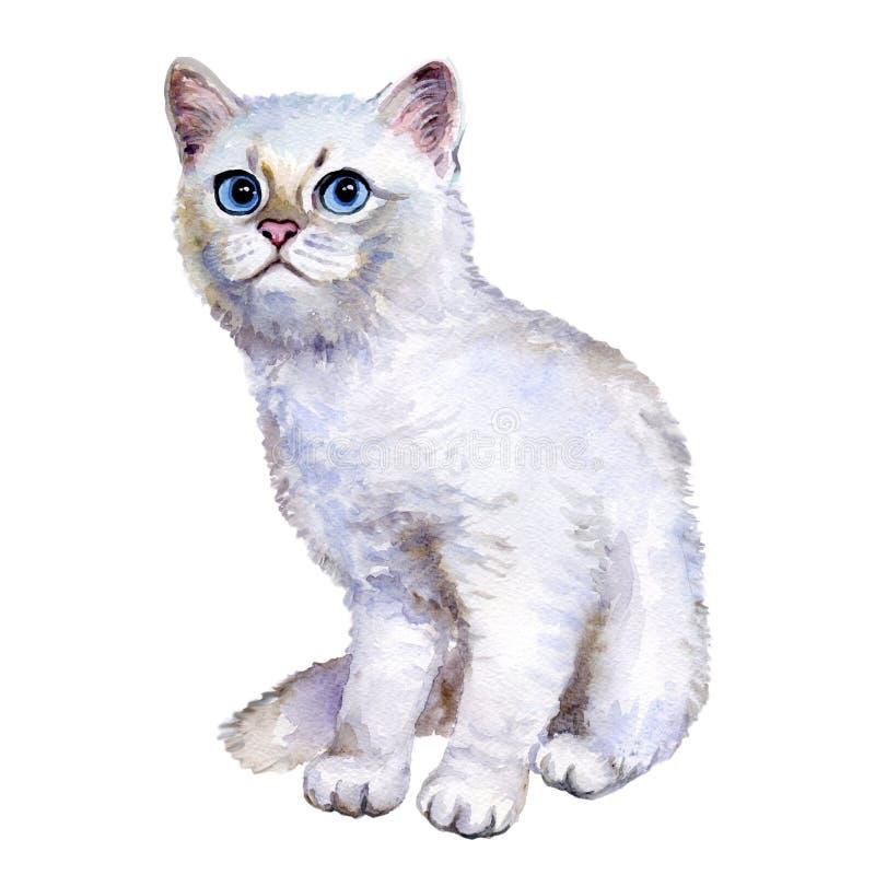 Cierre de la acuarela encima del retrato del gatito de plata del shorthair británico popular aislado en el fondo blanco Chinchill stock de ilustración