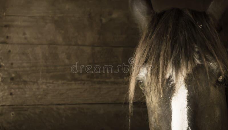 Cierre de la cabeza de caballo encima del fondo de madera fotografía de archivo