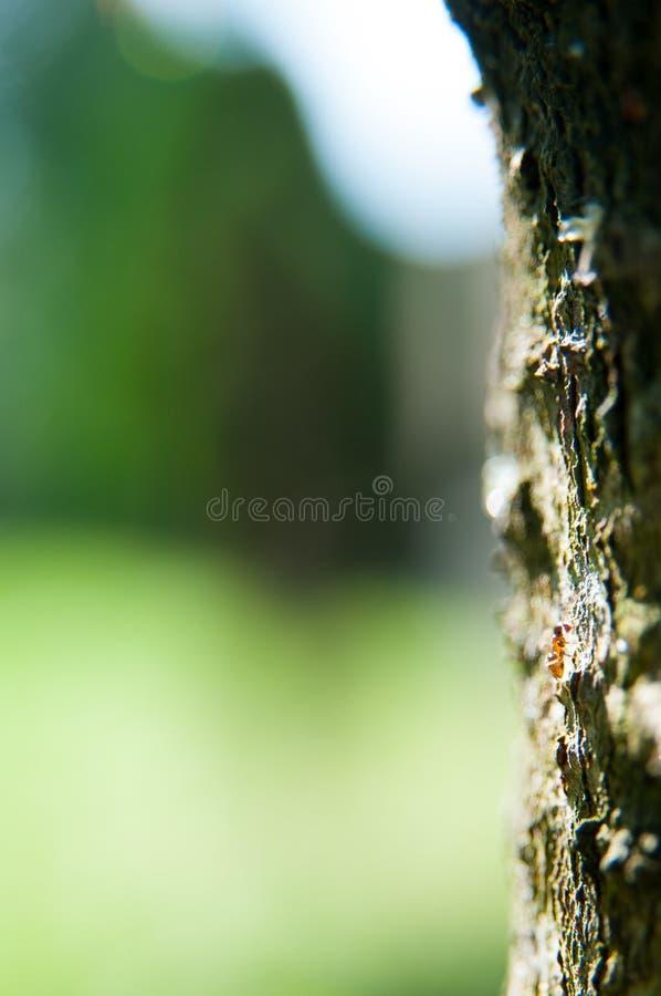 Cierre de la corteza de árbol para arriba fotografía de archivo