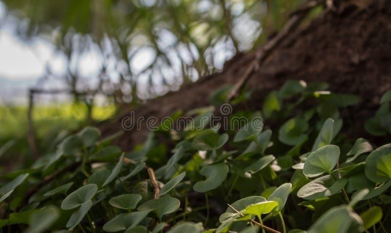 Cierre de la cubierta de tierra de la mala hierba del riñón para arriba fotografía de archivo libre de regalías