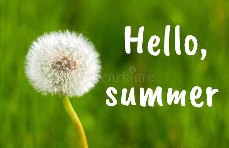 Cierre de la flor del diente de león para arriba contra fondo de la hierba del verano Hola texto del verano imagen de archivo libre de regalías