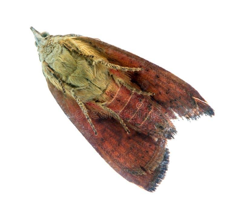 Cierre de la mariposa del color que se incorpora en el vidrio fotografía de archivo libre de regalías