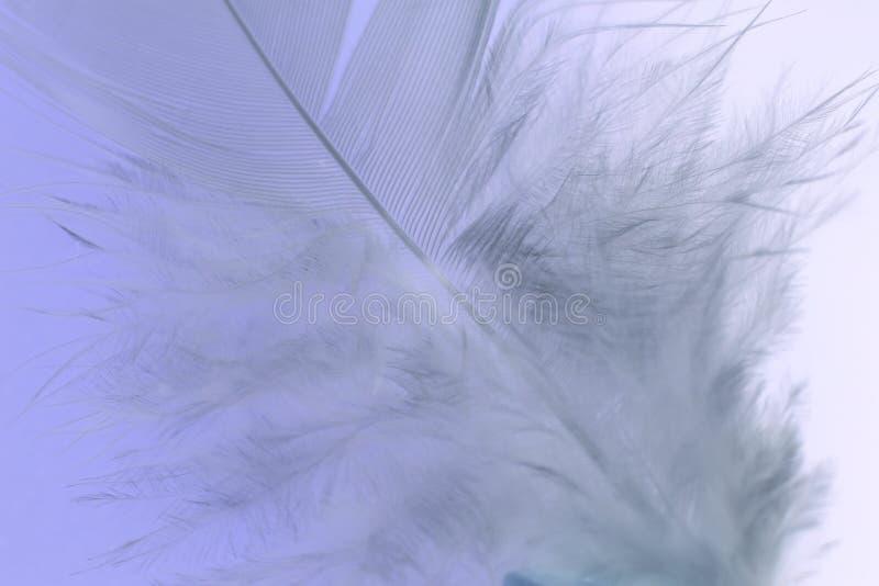Cierre de la pluma blanca fotos de archivo