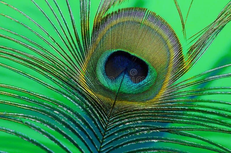 Cierre de la pluma de pavo real con fondo de color de menta imágenes de archivo libres de regalías