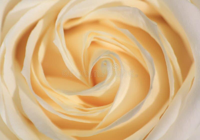 Cierre de Rose para arriba imágenes de archivo libres de regalías