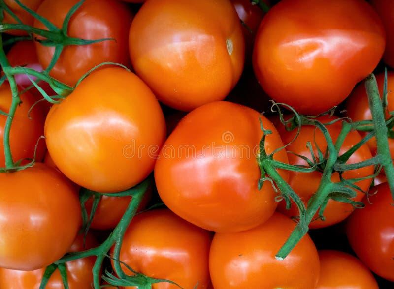 Cierre del fondo de los tomates para arriba fotos de archivo