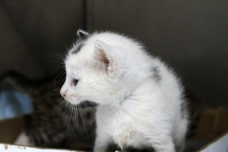 Cierre del gatito del bebé para arriba foto de archivo libre de regalías