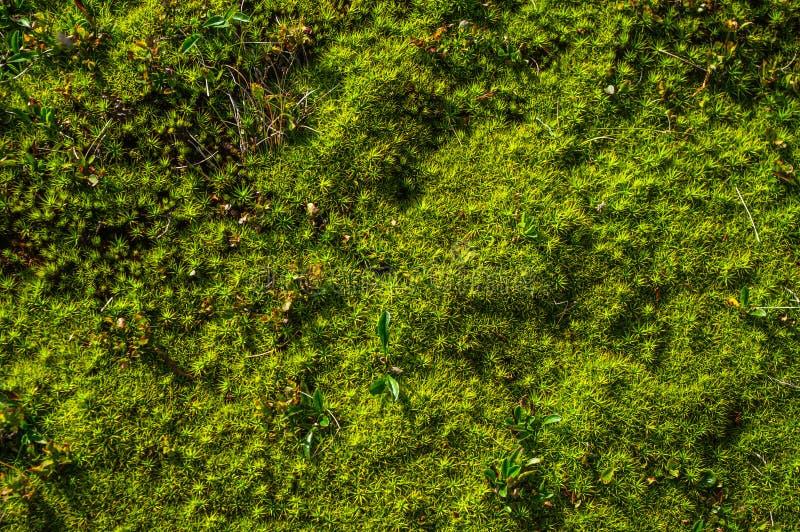Cierre del musgo del bosque para arriba fotos de archivo libres de regalías