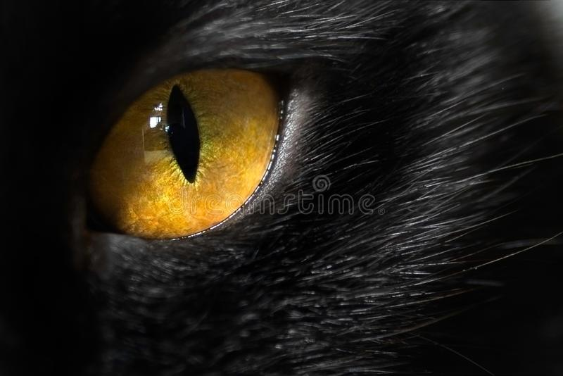 Cierre del ojo de gato para arriba imagenes de archivo