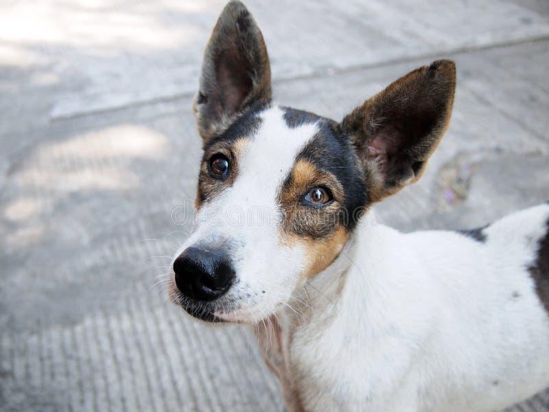 Cierre del perro de la calle para arriba imagen de archivo