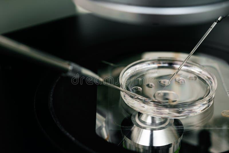 Cierre del proceso de la fertilización in vitro para arriba Equipo en el laboratorio de la fertilización, IVF fotos de archivo libres de regalías