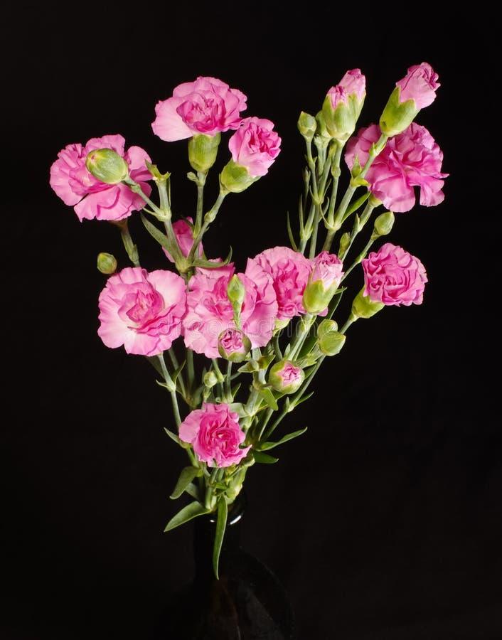 Cierre del ramo de la flor del clavel encima de la visión superior foto de archivo libre de regalías