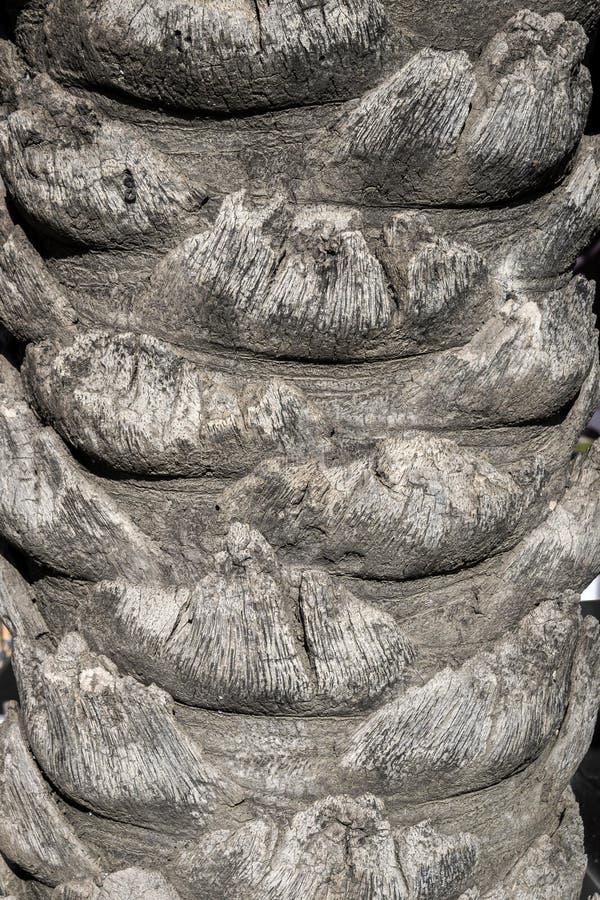 Cierre del tronco de palmera encima del viejo fondo natural foto de archivo