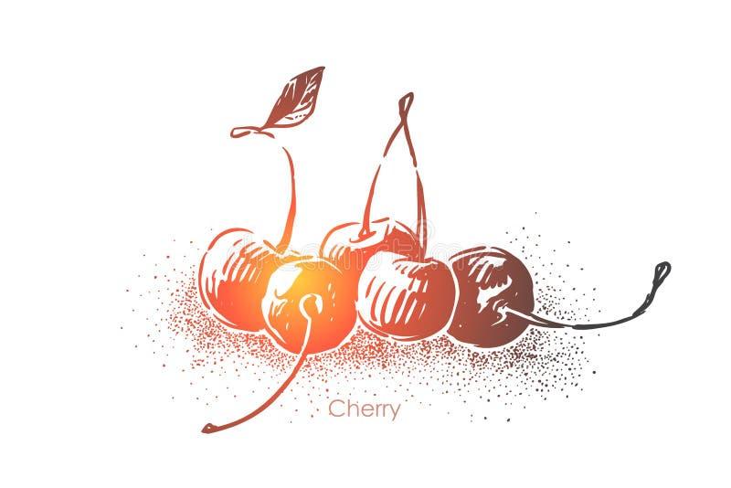 Cierre delicioso de la cereza para arriba, baya comestible dulce, postre natural jugoso, delicadeza orgánica, comida vegetariana  libre illustration