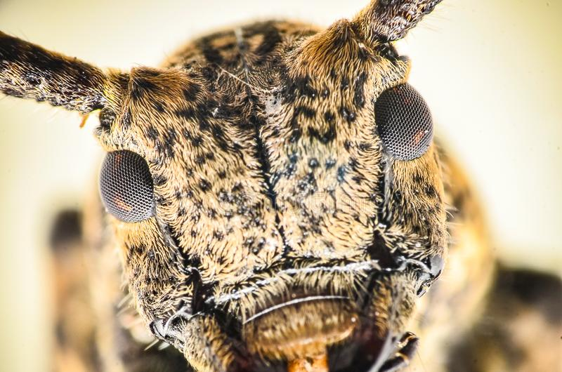 cierre encima de la cabeza y de ojos del insecto fotografía de archivo