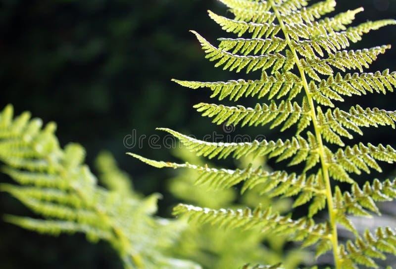 Cierre encima de la planta en día soleado, foto hermosa del helecho del helecho de la naturaleza foto de archivo